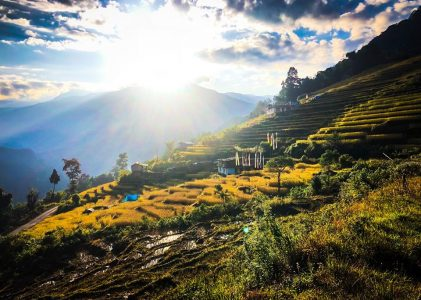 Agroecology, Organics and Sustainability Transitions in Sikkim, India