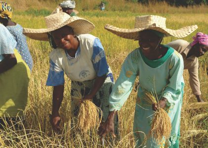 New Policy Brief – Nourishing Life. Territories of Life and Food Sovereignty