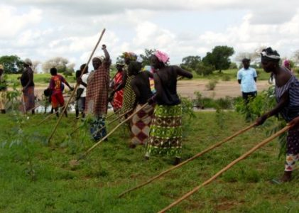 New Backgrounder: Scaling Agroecology from the Bottom up: Six Domains of Transformation